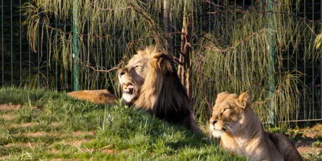 Sønderborgvej 7 København zoo rabat